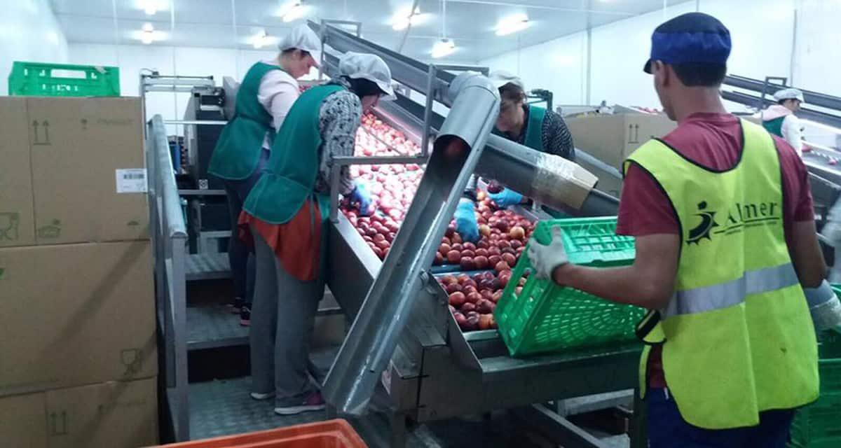 La UE se plantea la ampliación del cupo de retirada de fruta para España