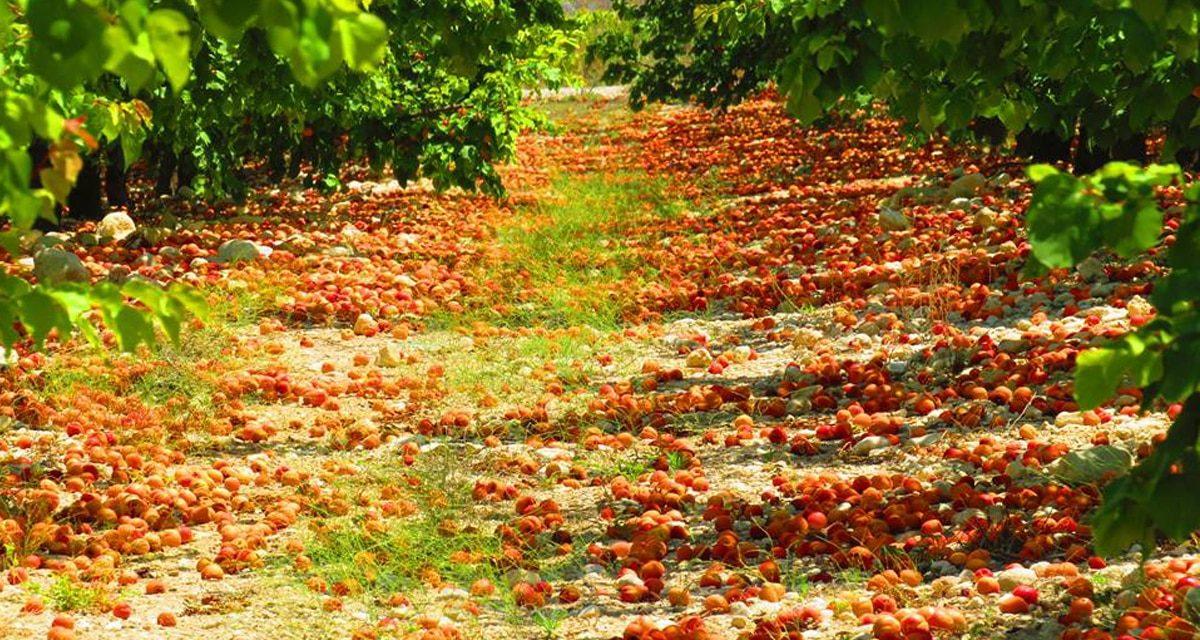 Murcia se escapará del plan de arranque de frutales de hueso