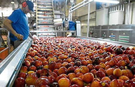 Los agricultores pueden tramitar desde hoy la retirada de fruta con cargo al cupo adicional aprobado por la UE
