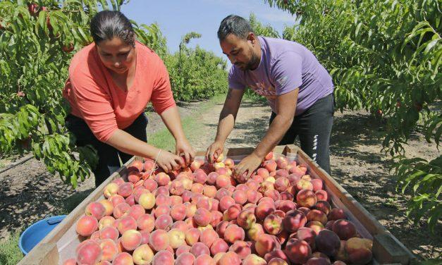 El mercado de la fruta de hueso en el aire