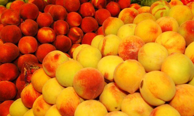 Aragón analiza a partir de hoy las crisis de la fruta de hueso esta campaña