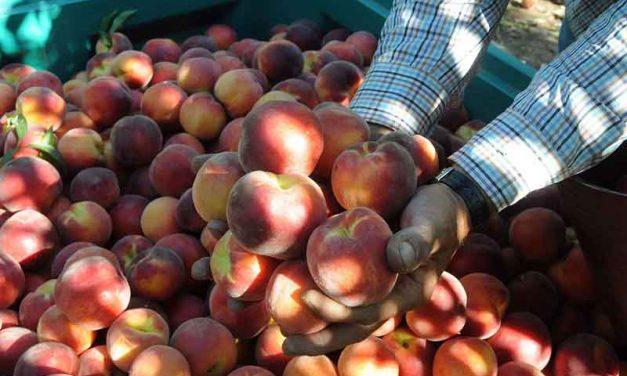 Agricultura convoca al sector de la fruta para estudiar medidas a la crisis