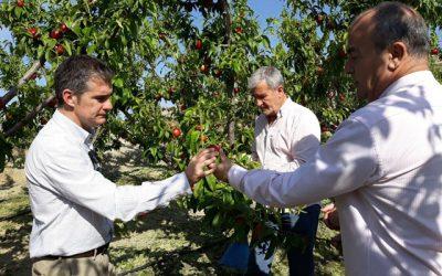 El seguro agrario se hace cargo de los daños provocados por el pedrisco en la Región de Murcia