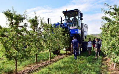 """""""Sistemas de conducción eficientes y adaptados a la mecanización de los cultivos frutales"""""""